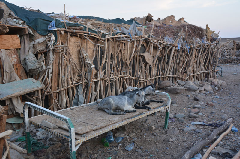 Poblado afar de Hamed Ela