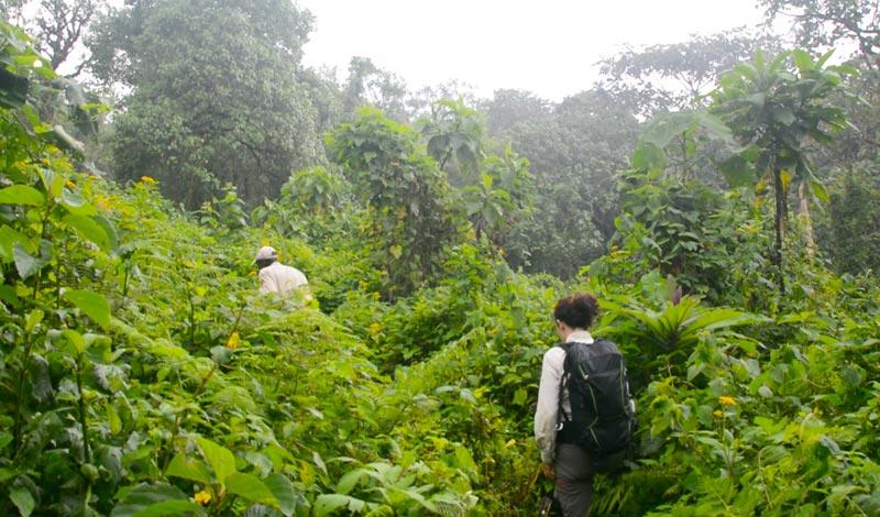 Adentrándonos en la selva de Virunga