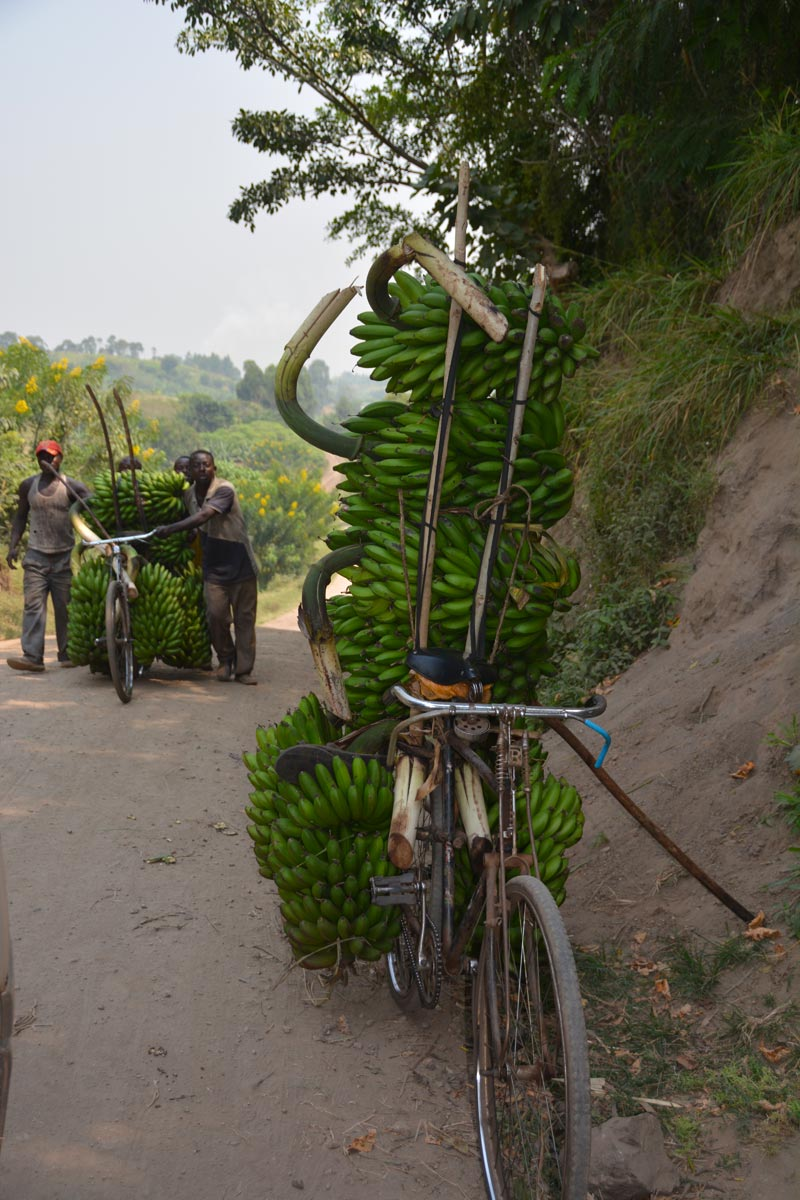 Bicicletas cargadas de matoke