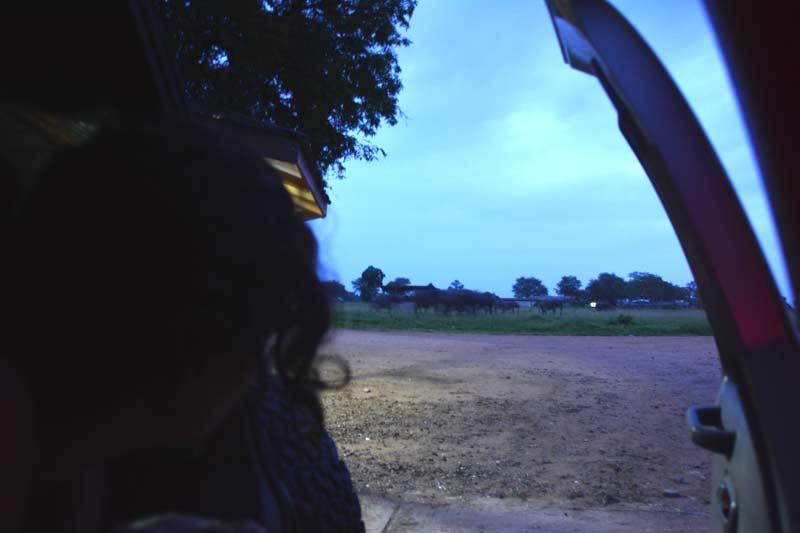10 Saliendo del coche con los elefantes al fondo