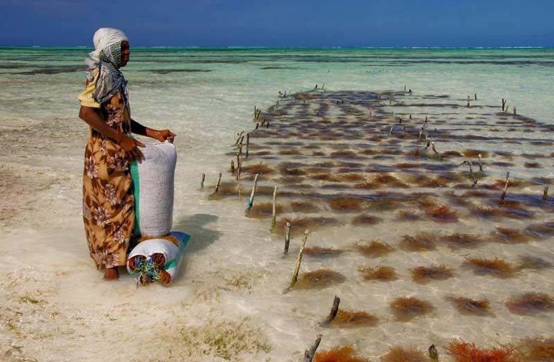 8 Mujer cultivando algas