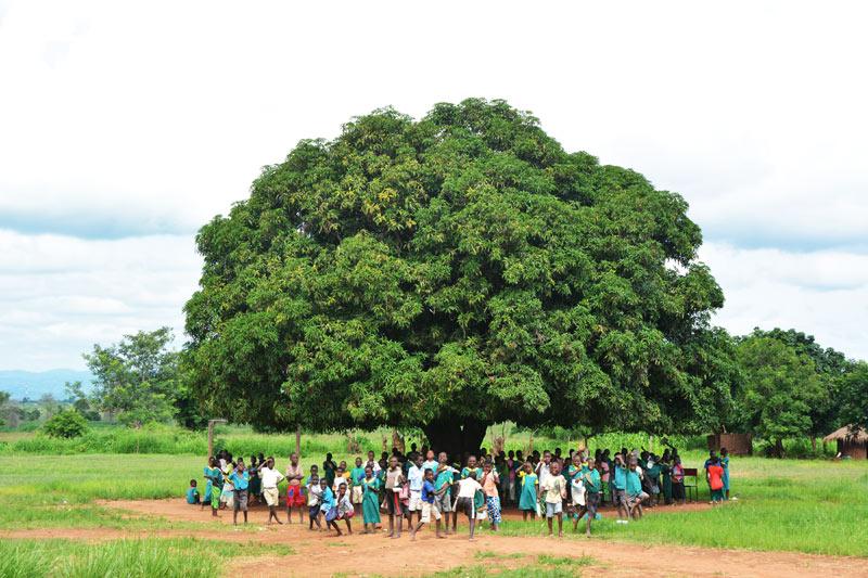 Alumnos dando clase bajo un árbol de mango