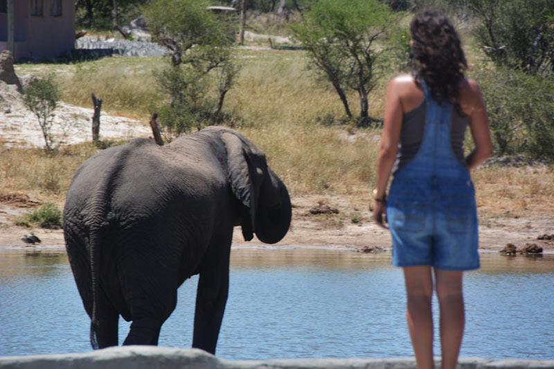 Elefante en el Elephant & Sands
